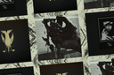 Víbora Umbra + Noir Noir