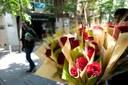 Les parades de venda de roses per Sant Jordi es poden sol·licitar per Internet