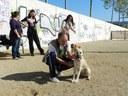 L'Ajuntament estudiarà la creació d'una Taula de treball sobre el benestar animal