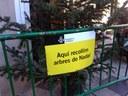 L'Ajuntament de Mataró habilita 32 punts de recollida d'arbres de Nadal