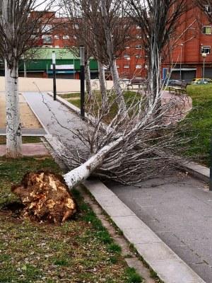 arbre_socarel.jpg