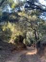 Esquerra proposem senyalitzar rutes forestals a Mataró